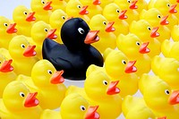 flock of rubber ducks in columns brought into line - symbolism of leader or black duck of the family