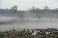 Morning fog, Danube wetlands, Donau Auen National Park, Lower Austria, Austria, Europe