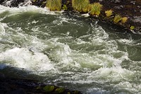 Rapid Water Flowing Through River Bank