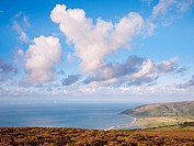 Late summer heather on Porlock Common overlooking Porlock Bay in Exmoor National Park, Somerset, England, United Kingdom