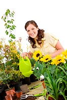 Gardening _ Woman pouring sunflowers with watering can on white background