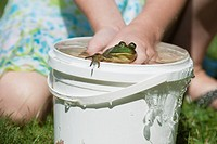 Young girl playing with a frog in a bucket full of water, Ontario.