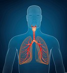 Respiratory system. On blue background