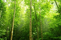 Green forest with ray of light in morning.