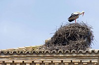 lone white stork in its nest