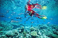 Snorkeler in tropical coral reef with rabbit fish (Siganus) and other coral fishes, Maldives, Indian ocean, Asia