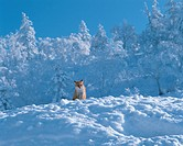 North Fox of snowy mountains