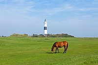 Lighthouse, horse, Kampen, Sylt island, Schleswig-Holstein, Germany, Europe, PublicGround