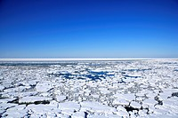 Drift ice, Shiretoko