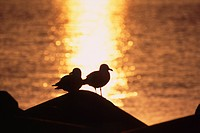Gull and shimmering sea at sunset