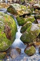 The Solana Toro stream in the Iruelas Valley  Sierra de Gredos  Ávila  Castilla León  Spain