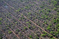 Aerial view, illegal slash-and-burn in the Gran Chaco, first, parallel aisles are cut, then two bulldozers with a chain between drive along the strips...