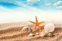 Sea shells on the sand against blue sky