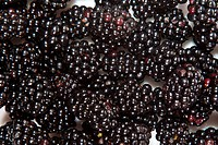 Composition of black raspberries on white isolated background in studio