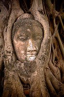 buddha´s head in banyan tree roots, ayuthaya, thailand