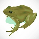 Green realistic frog isolated on white EPS10 _ Gradient, Transparency, Mesh