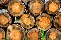 Background of cross section of cut old trees in a pile