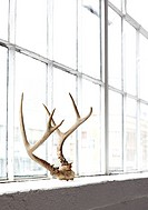 Still life of deer antlers in a windowsill