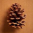 Still life of a pine cone on a fabric background