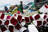 Women sell wrapped boxes of red roses in the flower market of Bogota, Colombia, 10 July 2010  South American countries Colombia and Ecuador are world ...