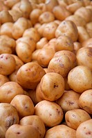 Big bunch or pile of white potatoes diminishing to soft focus