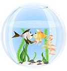in a glass aquarium two fish in love