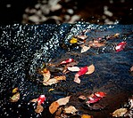 Fallen leaves in fall in river by edge of waterfall