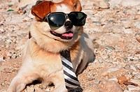Funny puppy in sunglasses wearing a necktie
