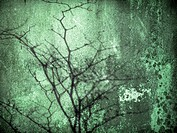 green grunge old wall texture with tree shadow