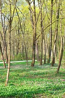 Peaceful Forest Scene with Early Spring Vegetation
