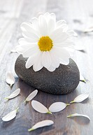 white blossom on a stone still