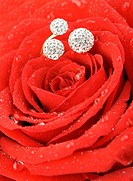 Red rose with a ring with jewels and water drops. A photo closeup