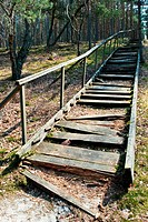 Broken weathered wooden stairs at pine forest