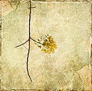yellow blossom branch divider on cracked plaster
