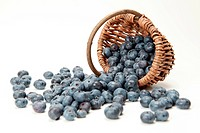 Fresh Blueberries falling out of a basket