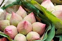 fresh lotus bud bouquet in asian flower market