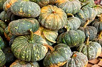 a pile of picked pumpkins ready for sale