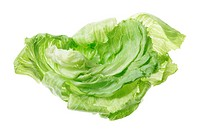 Iceberg Lettuce on White Background