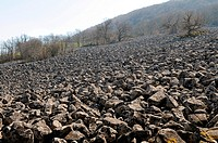 Impressive field of volcanic stones, called the Clapas de Thubiès, the lava flow of Roquelaure, situated on the municipality of Lassouts, near the sma...