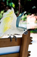 beautiful white parrot on a park bench