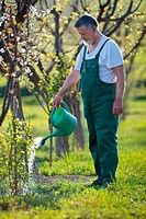 watering orchard/garden _ portrait of a senior man gardening in his garden color toned image