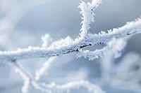 branches covered in snow and ice crystals