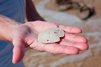 Woman holding a sand dollar found on the beach