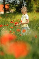 Girl, 6 years, picking poppies
