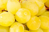 Closeup of grapes on white background