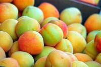 Aprikose, Apricot
