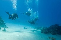 Scuba divers during a dive in clear shallow water. Temple, Sharm el Sheikh, Red Sea, Egypt.