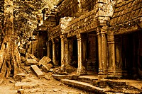 The ancient ruins of Ta Prohm at the Angkor Wat site in Cambodia