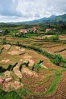 Asian landscape of Indonesia with small village between rice fields