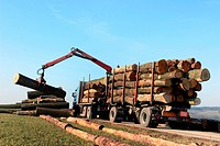 Forestry workers in the loading of logs with a crane